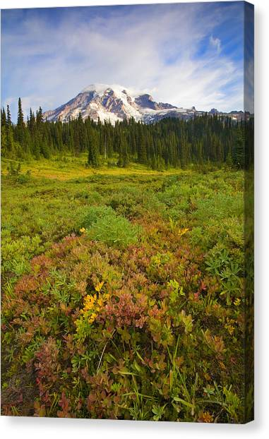 Mountain Dew Canvas Print - Alpine Meadows by Mike  Dawson