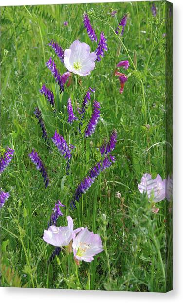 Alpine Vetch And Primroses Canvas Print