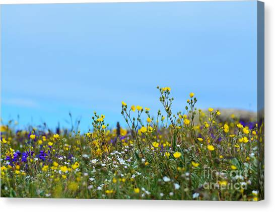 Canvas Print featuring the photograph Alpine Wildflowers by Kate Avery
