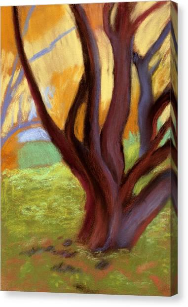 Alvarado Park Canvas Print