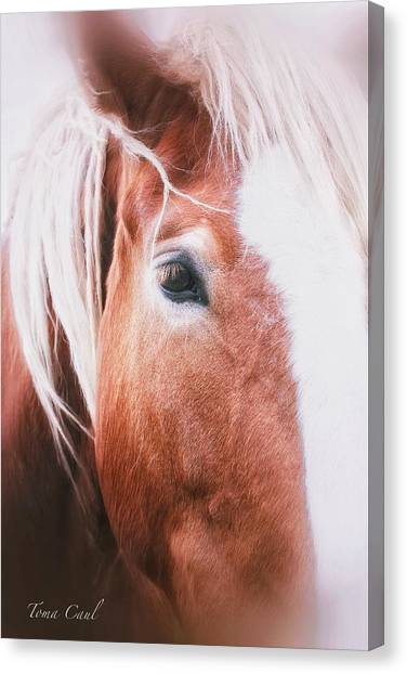 Always Dream Signed Canvas Print