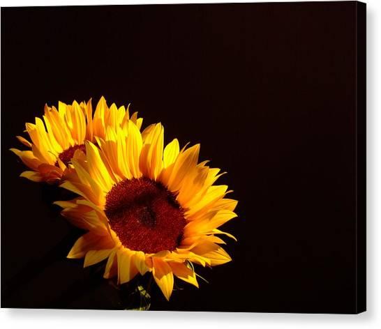 Always Into The Sun Canvas Print by Juana Maria Garcia-Domenech