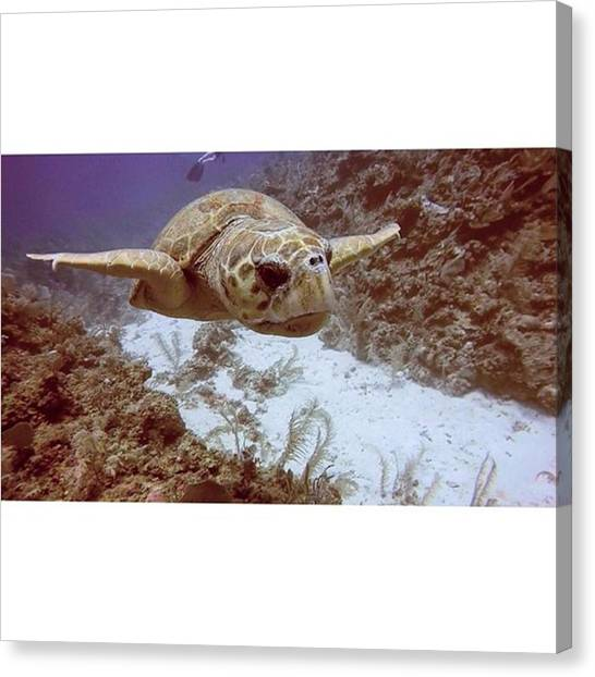 Tortoises Canvas Print - Always My Favourite Dive-buddy. Let Not by Peter Traveling