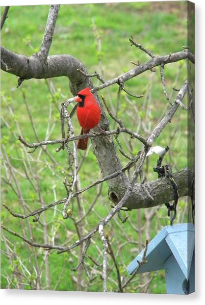 Always With Us -cardinals Canvas Print