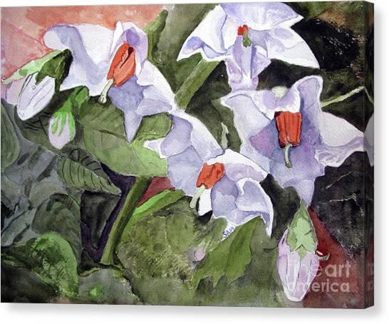 Amanda's Blue Potato Flowers Canvas Print