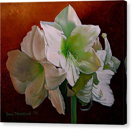 Amaryllis 2 Canvas Print by Doug Strickland