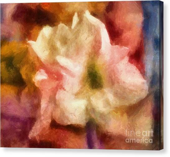 Amaryllis Canvas Print - Amaryllis Colori by Lutz Baar
