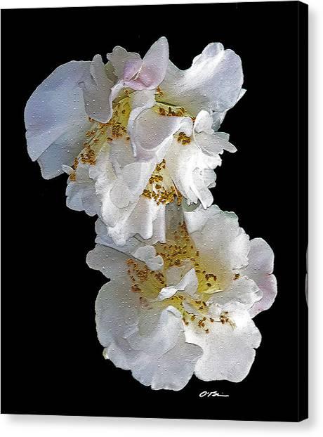 Camellia Canvas Print - Amazing Grace by Claudia O'Brien