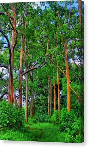 Amazing Rainbow Eucalyptus Canvas Print