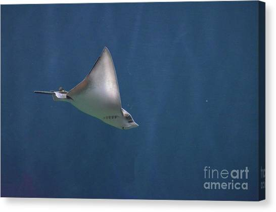 Amazing Stingray Underwater In The Deep Blue Sea  Canvas Print