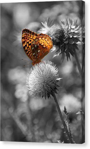 Amber Butterfly Colorized Canvas Print