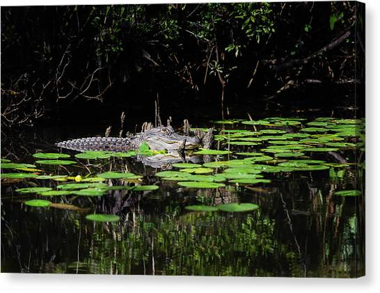 American Alligator In South Walton Florida Canvas Print