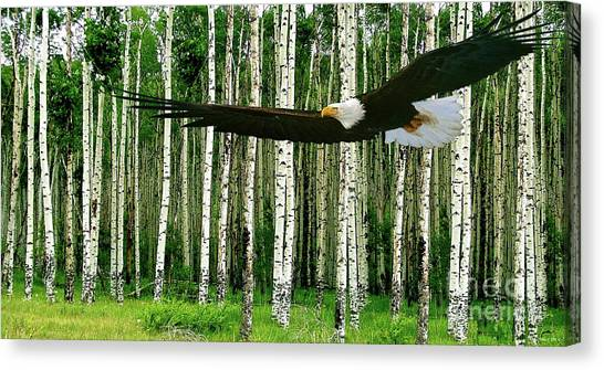 Sporting Kansas City Canvas Print - American Bald Eagle, Hunting, Cutthroat River Basin, Colorado by Thomas Pollart