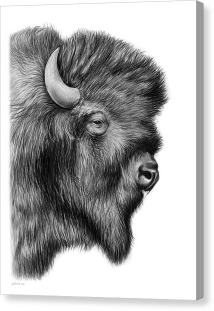 Bison Canvas Print - American Bison by Greg Joens