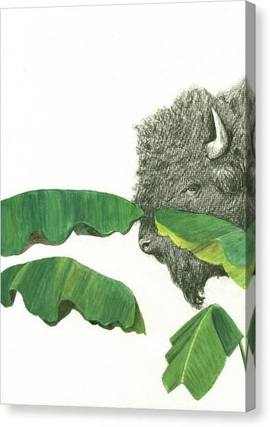 Bananas Canvas Print - American Buffalo 1 by Juan Bosco