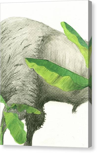 Banana Canvas Print - American Buffalo 2 by Juan Bosco