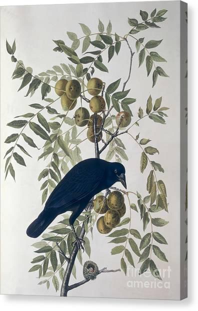Wild Berries Canvas Print - American Crow by John James Audubon