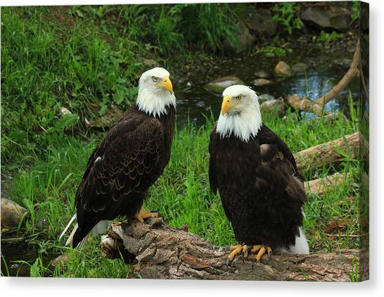 American Eagles Canvas Print