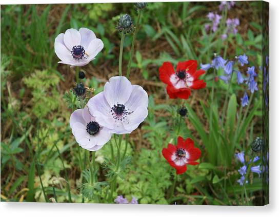 American Flowers Canvas Print