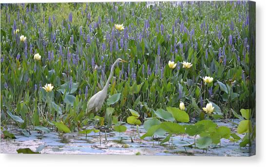 American Lotus - Great Egret Canvas Print