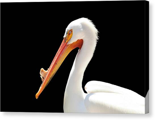 Canvas Print - American Pelican by Jeannie Burleson
