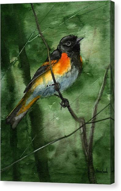 American Redstart Canvas Print by Sean Seal