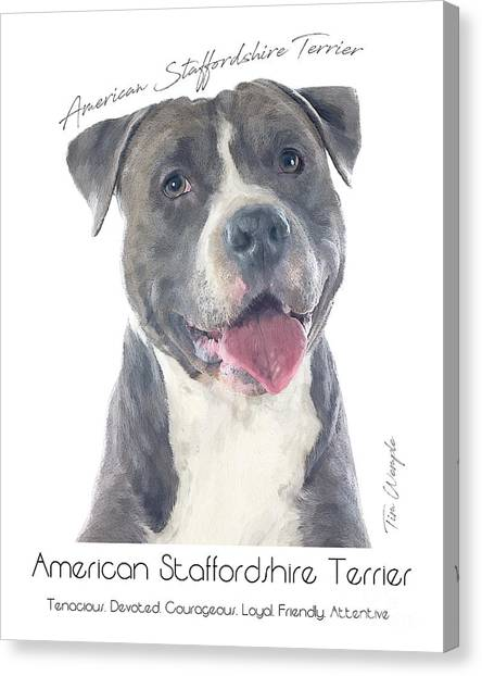 American Staffordshire Terrier Poster 2 Canvas Print by Tim Wemple