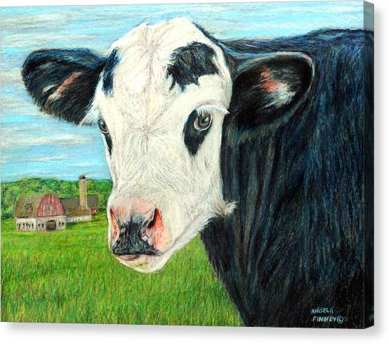Americana Calf Canvas Print by Angela Finney