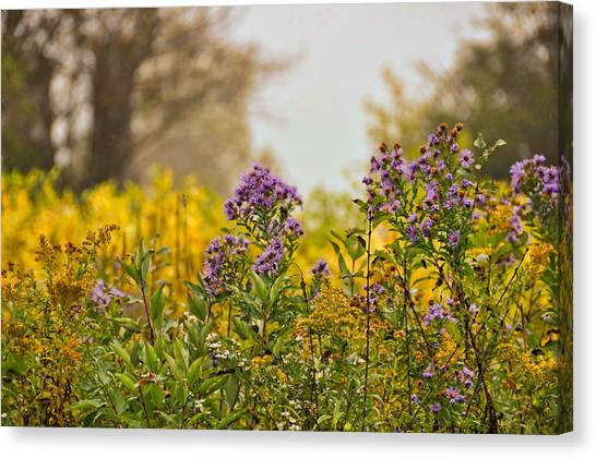 Amethyst And Golden Rod Canvas Print by JAMART Photography
