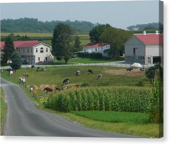 Amish Country Road Canvas Print
