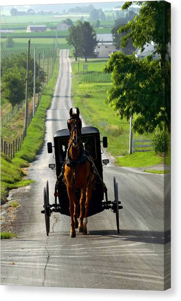 Amish Morning Commute Canvas Print
