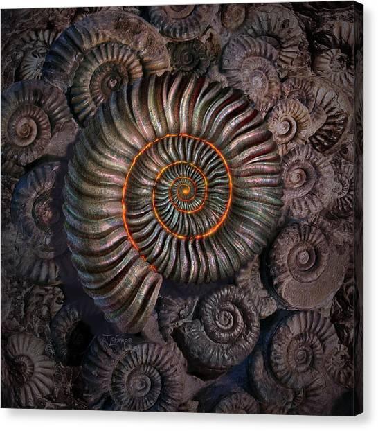 Spiral Canvas Print - Ammonite 1 by Jerry LoFaro