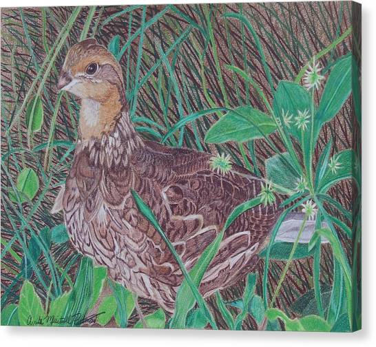 Among The Thistles Canvas Print