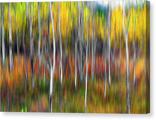 Amongst Poplar And Wintergrass Canvas Print