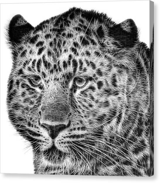 Canvas Print - Amur Leopard by John Edwards