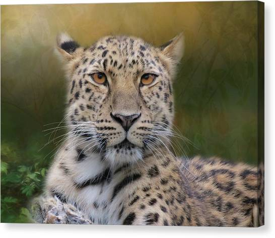Canvas Print featuring the photograph Amur Leopard by Patti Deters