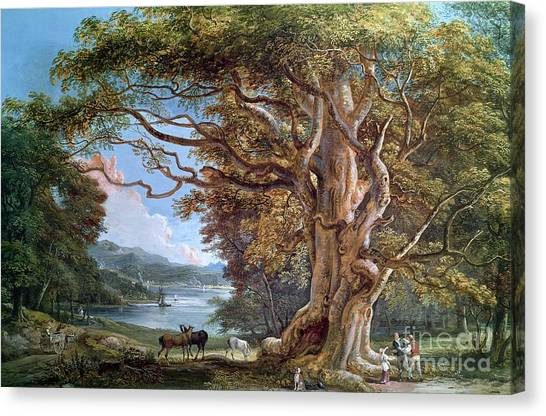 Stag Canvas Print - An Ancient Beech Tree by Paul Sandby