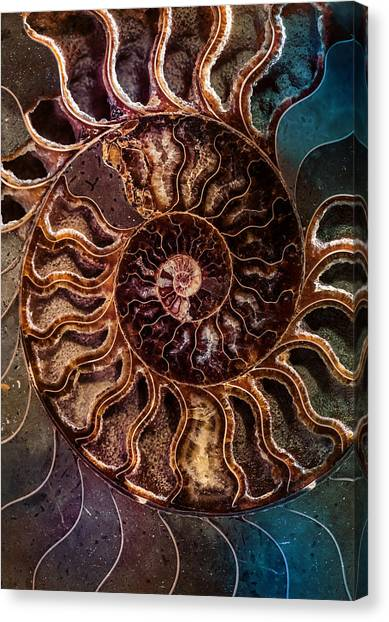 An Ancient Shell Canvas Print