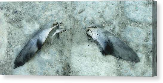 An Angel Must Have Lost Its Wings Canvas Print