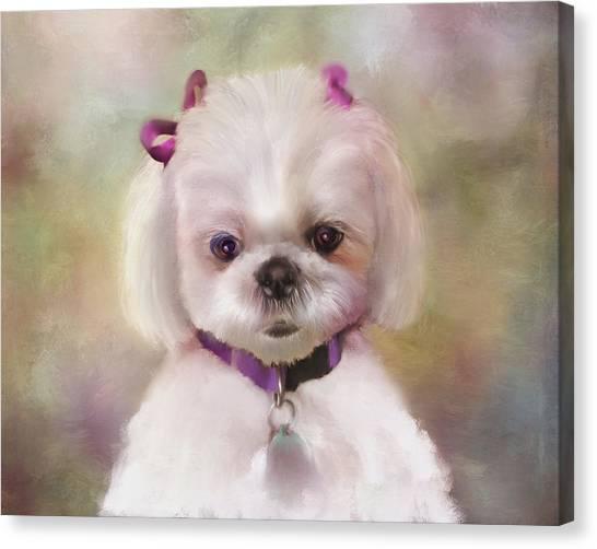 White Maltese Canvas Print - An Angel Of Fluff by Colleen Taylor