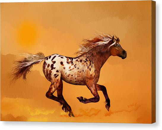 An Appaloosa Called Ginger Canvas Print