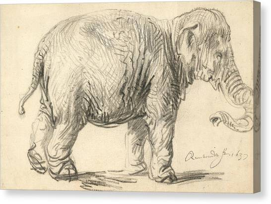 Baroque Canvas Print - An Elephant by Rembrandt