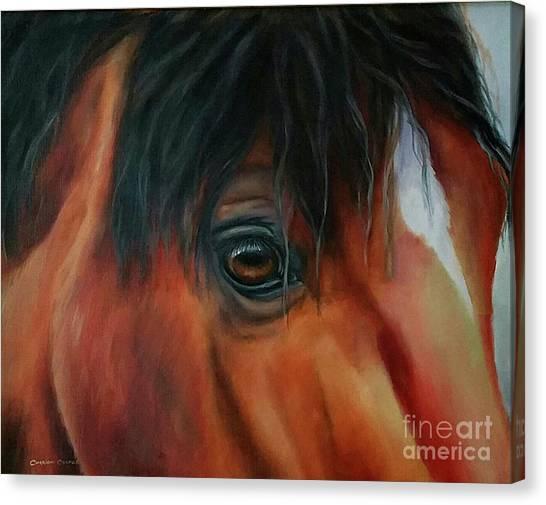 An Eye For Beauty Canvas Print