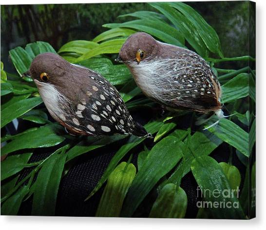 An Old Couple These Two Birds Canvas Print