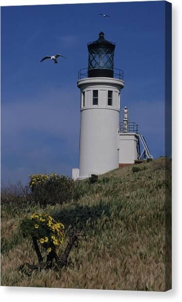Anacapa Lighthouse And Western Gulls Canvas Print