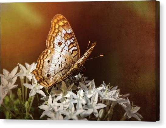 Anartia Jatrophae Canvas Print - Anartia Jatrophae - White Peacock Butterfly  by Saija Lehtonen