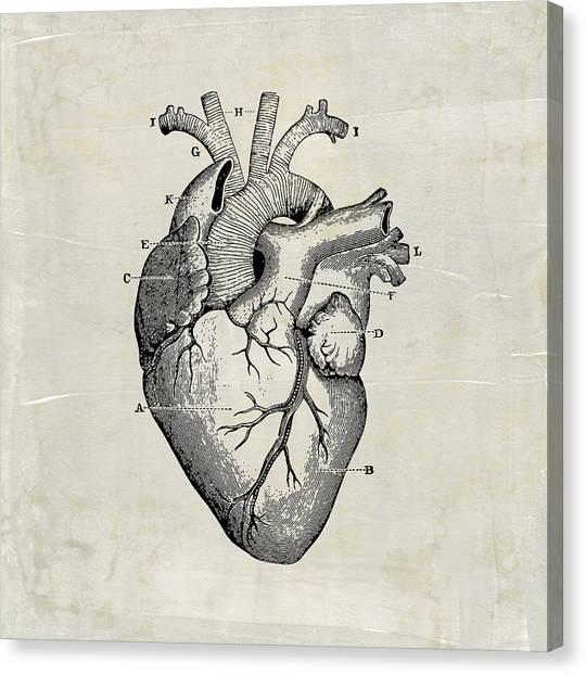 Anatomical Heart Medical Art Canvas Print