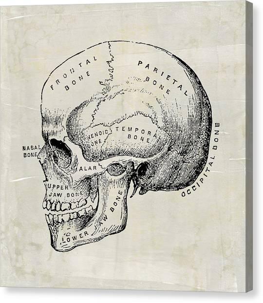 Anatomical Skull Medical Art Canvas Print