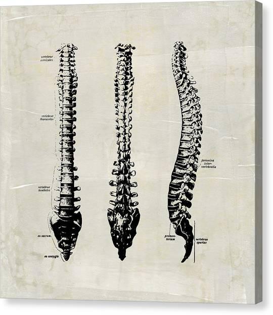 Anatomical Spine Medical Art Canvas Print