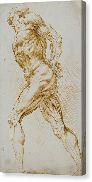 Nudes Canvas Print - Anatomical Study by Rubens